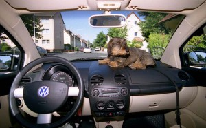VW New Beetle: Cockpit, Armaturenbrett