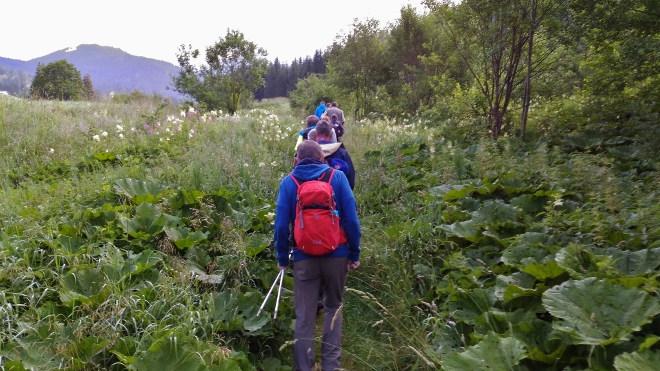 Walchhofer´s Alpenhof in Filzmoos, Wandern und Wanderwege