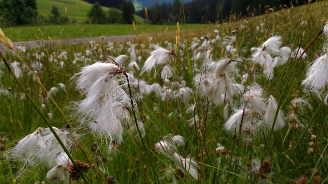 Walchhofer´s Alpenhof in Filzmoos, Umgebung, Wanderwege und Natur