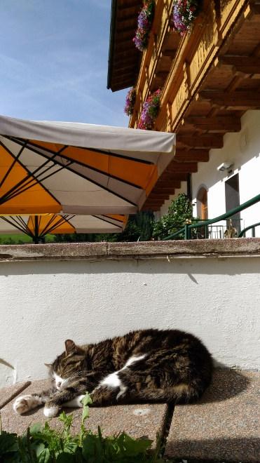 Walchhofer´s Alpenhof in Filzmoos, Hotel